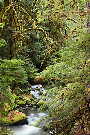 Photographs Washington Oregon Olympic National Park
